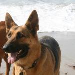 犬の散歩で長いリード(特に大型犬用のロングリード)を使うのは迷惑だし条例違反だと思う